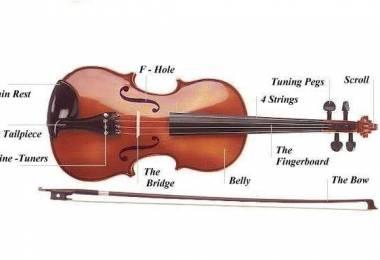 Cấu tạo đàn Violin